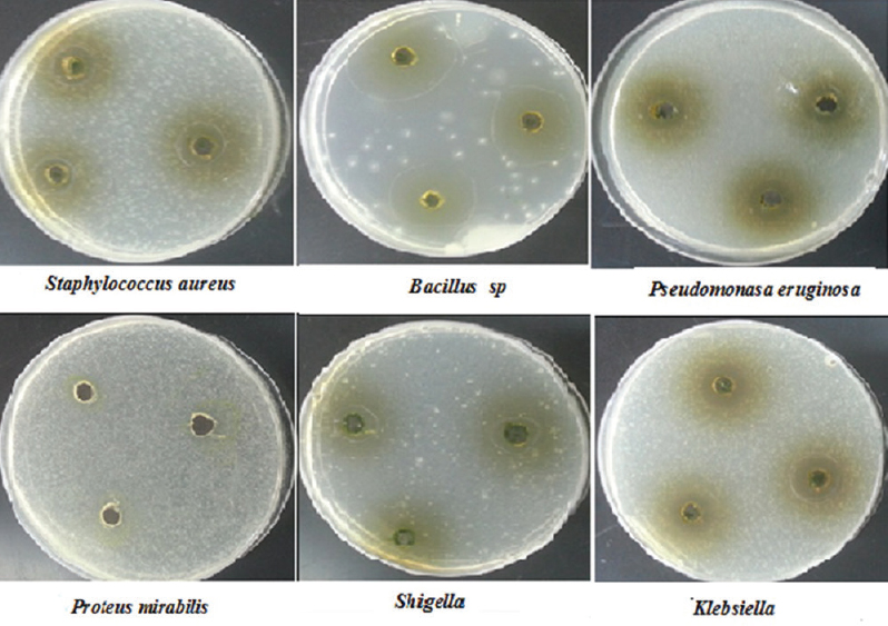 research papers about antmicrobial activity of plants International journal of scientific & technology research volume 3,  various types of plants contain natural  antimicrobial activity.