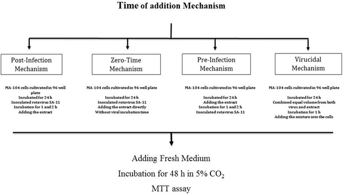 Egyptian pharmaceutical journal table of contents evaluation of an inhibitory effect of edible mushroom extracts against rotavirus infection fandeluxe Choice Image